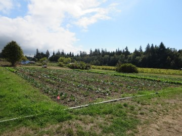 Dr. Smukler's trial fields at the UBC Farm